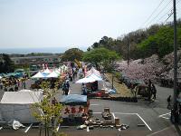 Sakuramaturi1